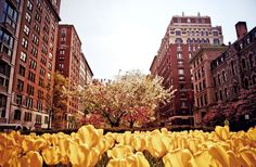 Spring tulips and blossoms on Park Avenue. Upper East Side, New York City.// my fav city and fav flowers. Yoga Nyc, Spring In New York, My Kind Of Town, Upper East Side, I Love Ny, City That Never Sleeps, Concrete Jungle, Park Avenue, City Photography