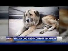 Image result for pet animals who died