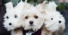 Blog sobre perros, alimentación, accesorios, higiene y mucho mas. Notas reportajes, concejos, articulos. Para tu perro #perros #perro #mascoweb #disfraz #disfraces #halloween