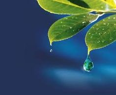 The more we control our mind, the more our inner peace increases and the happier we become. Water Art, Beautiful Sites, Rain Drops, Amazing Photography, Plant Leaves, Nature, Pictures, Inspiration, Google