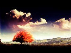 ذلك الذي يجعل الوردَ والشجر نارًا قادرٌ أيضًا على أن يجعل النارَ بَرْدًا وسلاما. ديوان شمس