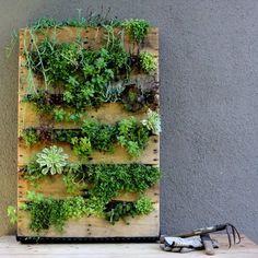 壁に緑を沢山飾りたい!そんな願いをかなえるグリーンウォール。絵画のように壁に掛けて楽しむ観葉植物はインテリアにもなり、とってもステキな空間が出来上がります。 最近は、東急ハンズや無印良品、ネットショップでも簡単...
