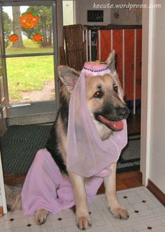 Costumes For German Shepherds