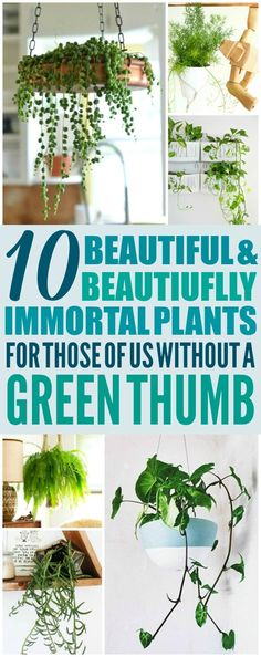 These 10 Low Maintenance Hanging Plants are THE BEST! I'm so glad I found these GREAT ideas! Now I have a great way to decorate my home and not kill the plants! Definitely pinning!