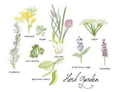herb garden.  #TERRAINsignsofspring