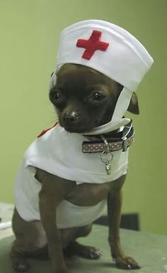 Nurse Chi Yuppypup.co.uk provides the fashion conscious with stylish clothes for their dogs. Luxury dog clothes and latest season trends, Dog Carriers and Doggy Bling. Next Day Delivery. Please go to http://www.yuppypup.co.uk/ https://www.facebook.com/YuppyPup