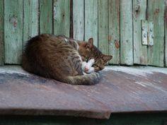 Street cat 74