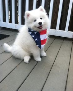 23 Photos of Samoyed Dogs for you, check out all of our other dog photos updated weekly. Very Cute Dogs, Cute Little Puppies, Cute Puppies, Fluffy Animals, Animals And Pets, Baby Animals, Cute Animals, Beautiful Dogs, Animals Beautiful