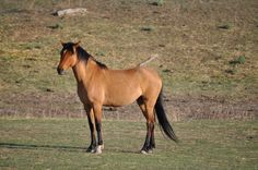 This is Bella....the little Spanish Mustang we sponsor at the Sanctuary