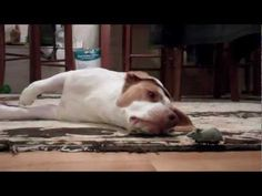ridiculously adorable beagle plays with his favorite mouse toy and has a sad moment when the batteries die.