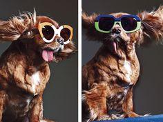 Toast the dog models for Karen Walker Sunglasses #dog #dogs #fashion #sunglasses #cute #eyewear #pets #style