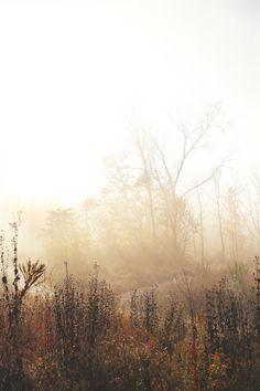 Autumn Photography, Landscape Photography, Art Photography, Autumn Lights, Environment Concept Art, Landscape Paintings, Landscape Photos, Landscapes, Mists
