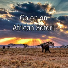 Bucket list: travel to Africa and go on a safari adventure!