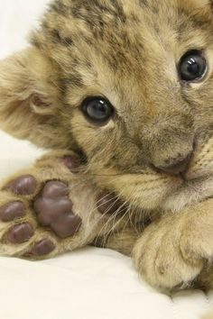 Cute Baby Animals, Animals And Pets, Kittens Cutest, Cats And Kittens, Old Cats, Cute Little Things, My Animal, Pet Birds, Puppies