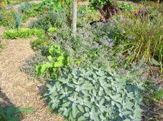 Minstens 8 Voordelen van Kruiden in de Groentetuin! - Blog Natuurlijke Moestuin