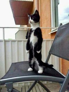 Overly Cute Cats That'll Make You Jealous You're Not Their Owner - Adorable Cats and Cute Kittens - Katzen Cute Funny Animals, Funny Animal Pictures, Cute Baby Animals, Funny Cats, Cute Animal Humor, Funny Images, Cool Cats, I Love Cats, Crazy Cats