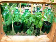 A ideia é reaproveitar materiais que iriam para o lixo para cultivar suas próprias hortaliças.