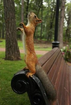 How can you not love squirrels!