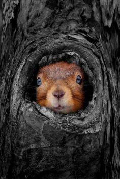 squirrel,,,color splash,,,