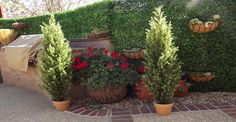 """Cypress Tree Faux Real? Yes, Faux! Need to add some height to your landscape? These artificial cypress trees are perfect for your backyard, patio or front porch. They truly look wonderful anywhere inside or outside your home! So, add that touch of """"green""""! It's nice, No Worries about water or maintenance, just enjoy!"""