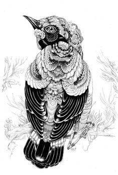 Beautiful bird illustration by Iain Macarthur Bird Illustration, Ink Illustrations, Animal Drawings, Art Drawings, Character Designer, Bird Art, Doodle Art, Zentangles, Painting & Drawing