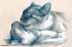 Amor felino + INFO: http://www.foyel.com/paginas/2010/02/1249/preguntas_frecuentes_sobre_reproduccion_felina/