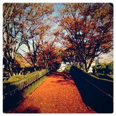 sumomo on PIXMOS  犬のさんぽ中、公園にて。  http://pixmos.net/photo/110724474995376543