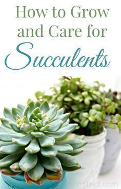 How to Grow and Care for Succulents...it's easier than you may think!