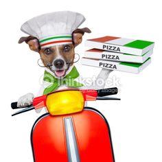 Foto de stock : pizza entrega de perro