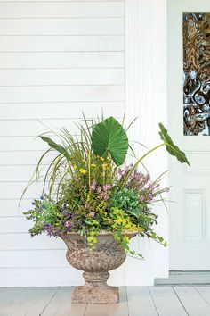 121 Container Gardening Ideas Let's hear it for elephant's ear! Its oversize leaves—the secret to this stately combination—create drama through scale. And they allow you to fill in the blanks with tiny, colorful flowers. Container Flowers, Container Plants, Organic Gardening, Gardening Tips, Vases, Gemüseanbau In Kübeln, Elephant Ears, Container Gardening Vegetables, Vegetable Gardening