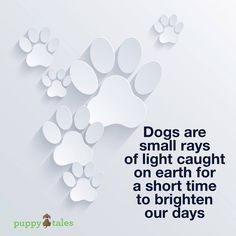 Dogs are small rays of light . . .