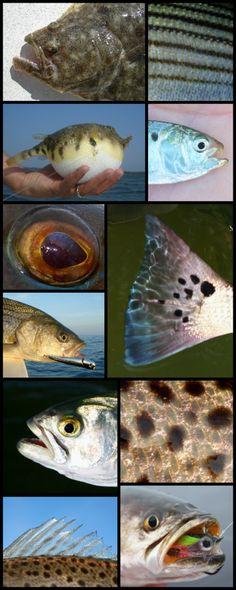Virginia Fly Fishing Guide