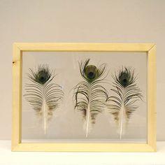 3 veren van een blauwe pauw ingelijst in een houten lijst van 30 x 40 cm.