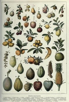 Fruits Exotiques  Including guava, papaya, mango, litchi fruit, passionfruit, pineapple, breadfruit, bergamot orange, coconut, and several other fruits, primarily from the equatorial Western hemisphere.  Histoire Naturelle Ilustree: Les Plantes.Julien Costantin and F. Faideau, 1922