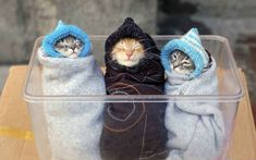 These cozy little purritos.