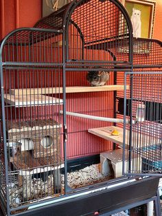 Parrot cage adapted for Chinchilla. Chinchillas, Guinie Pig, Chinchilla Care, Animals And Pets, Cute Animals, Small Animals, Classroom Pets, Degu, Pet Cage