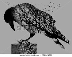 Double exposure of raven and trees - stock photo