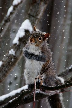 The Snow Squirrel on 500px by Stephen P Hunt, Sarnia, Canada