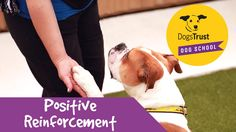 Dogs Trust Dog School: Positive Reinforcement Dogs Trust Dog School is here to help you with your dog. From the basics to more advanced training and behavioural advice, we're here to make sure you and your dog live in perfect harmony, and are able to bring the best out of each other.