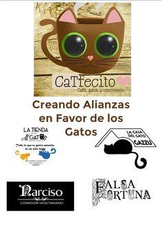 Creando Alianzas con los mejores.  Gato Gazzu  Tienda de los Gatos  ☕️Narciso Café   Falsa Fortuna