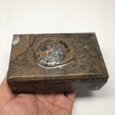 "618g, 5""x3""x2"" Rectangular Fossils Ammonite Brown Jewelry Box @Morocco, MF681"
