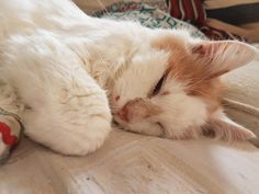 had to say goodbye to Barclay earlier today. i love you forever. by SamGreenaway cats kitten catsonweb cute adorable funny sleepy animals nature kitty cutie ca