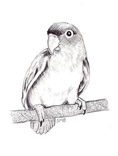 Sally Blanchard signed original pen and ink drawing of a Peach-faced Lovebird on a perch Angel Sketch, Bird Sketch, Angel Drawing, Realistic Animal Drawings, Bird Drawings, Pencil Art Drawings, Animal Sketches, Art Sketches, Pencil Drawings