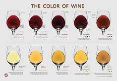Color Of Wine. This chart has some interesting info on the color of wine. Something else to note that this chart doesn't mention though, is that white wine will also gain color from being oak aged. Italy is the place to be for wine! Wine Tasting Party, Wine Parties, Art Du Vin, Wine Chart, Wine Folly, Tarte Fine, Different Wines, Wine Education, Wine Guide