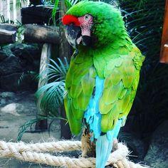 I found myself a friend when in #mexico #lascaletas #vallartaadventures #naturelover #naturephotography #naturelovers #nature_perfection #photographylovers #bird #birdsofinstagram #birds #birdstagram #instabird #colorful #animallover #macaw #macaws #macawsofinstagram #instanaturelover #instanature #natureshots #beautifulbirds #femaletravelbloggers #girlslovetravel #instatravel #travelblog #travelblogger #travelbuddy #visitmexico #puertovallarta