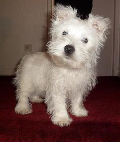 Wallace had a nice bath with his new Oatmeal Shampoo he smells Yummy
