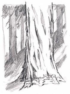 redwood trunk texture 4