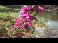 Orchideengarten, Hilo, Big Island, Hawaii - HD