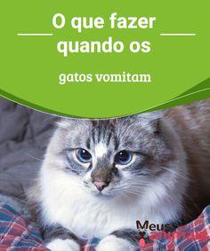 O que fazer quando os gatos vomitam? É grave?  Um #gato #vomitar pode ser normal, mas também pode ser algo para te deixar #alerta. Veja quando a situação pode ser mais perigosa. #Alimentação