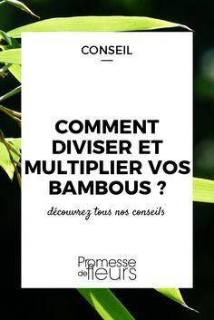 Les bambous se multiplient facilement au jardin. Pour savoir quand et comment procéder, suivez les conseils de notre expert !